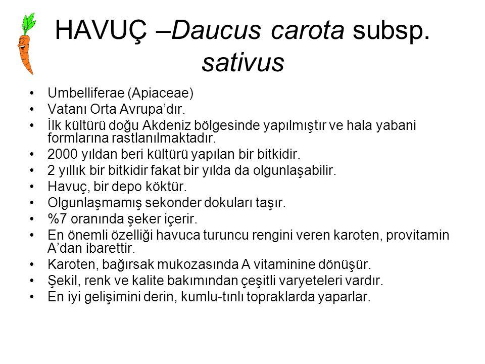 HAVUÇ –Daucus carota subsp. sativus