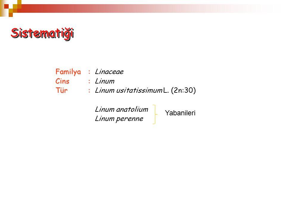 Sistematiği Familya : Linaceae Cins : Linum