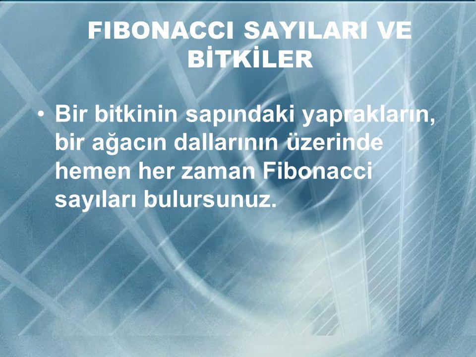 FIBONACCI SAYILARI VE BİTKİLER