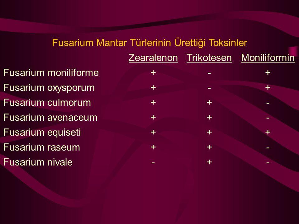 Fusarium Mantar Türlerinin Ürettiği Toksinler