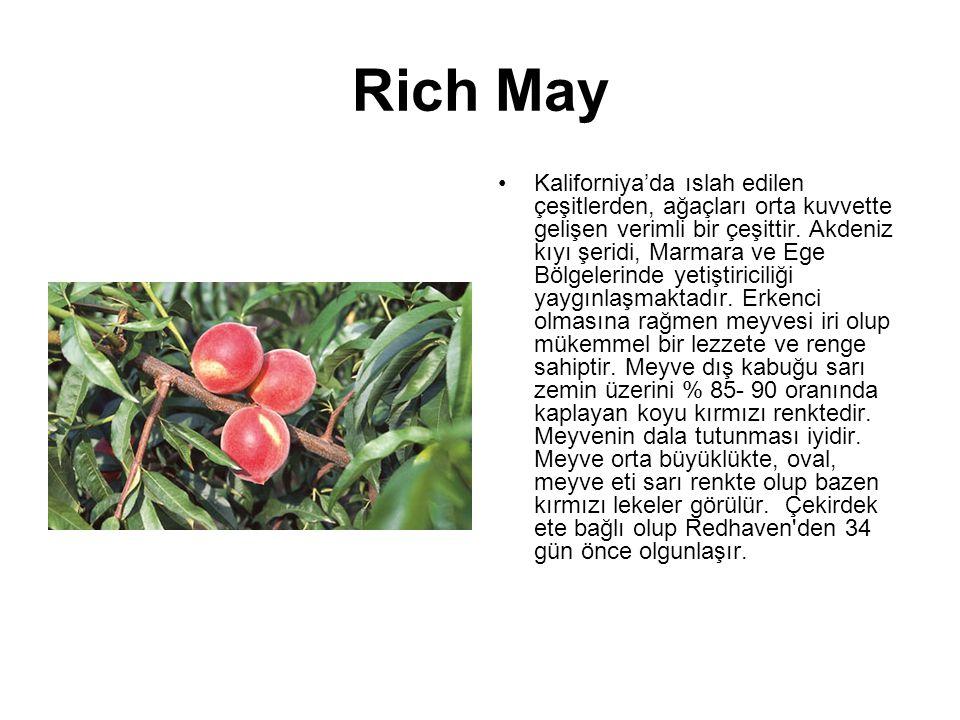 Rich May