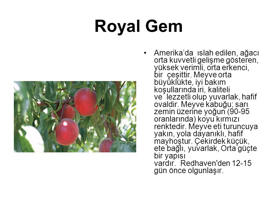 Royal Gem