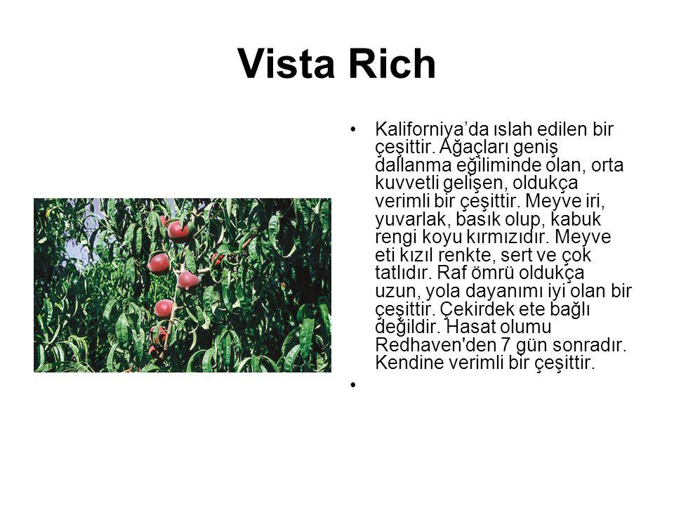 Vista Rich