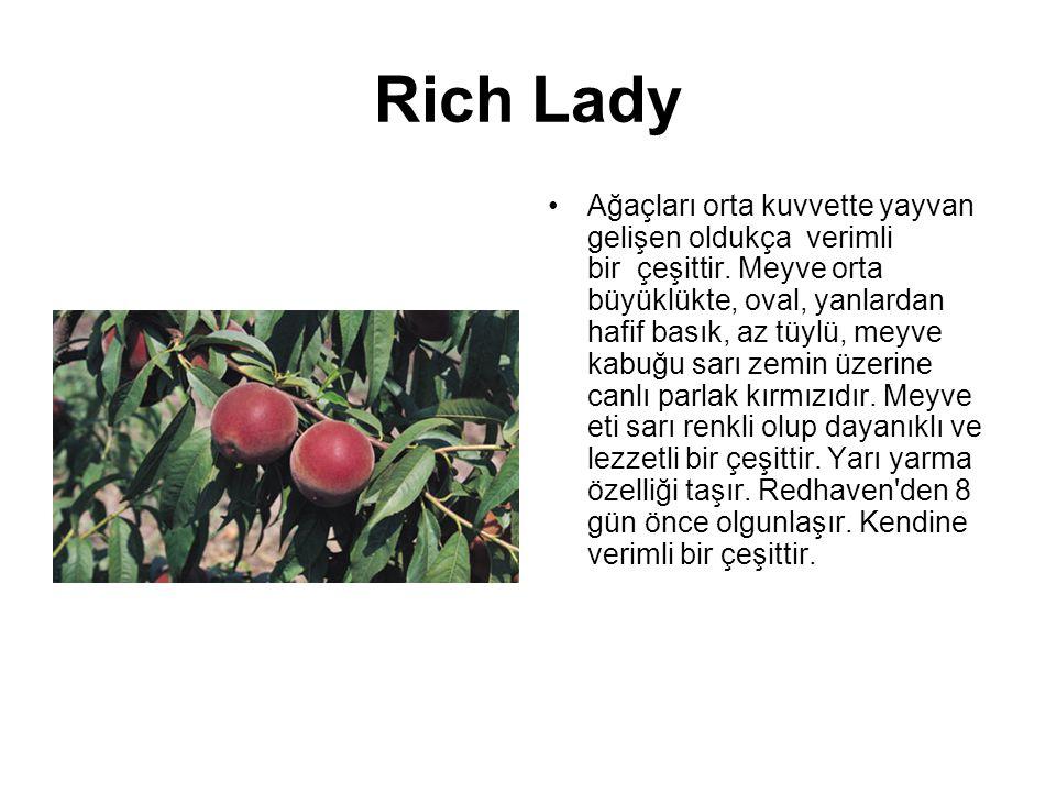 Rich Lady