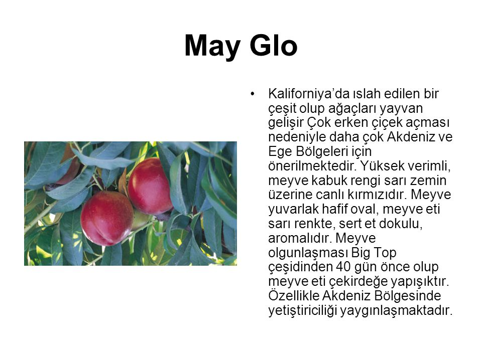 May Glo