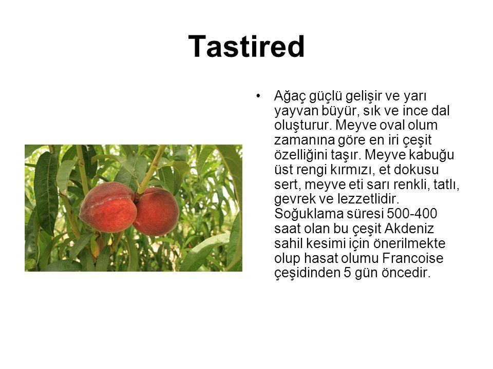 Tastired