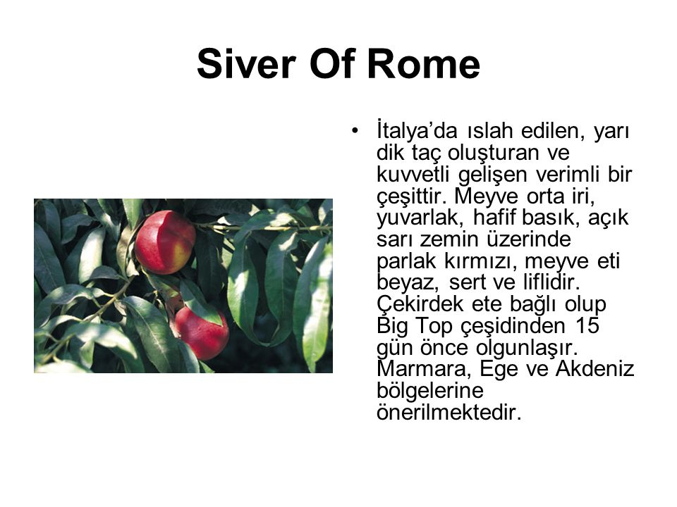 Siver Of Rome
