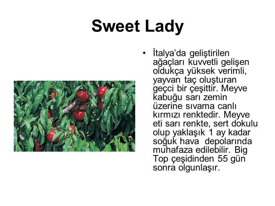 Sweet Lady