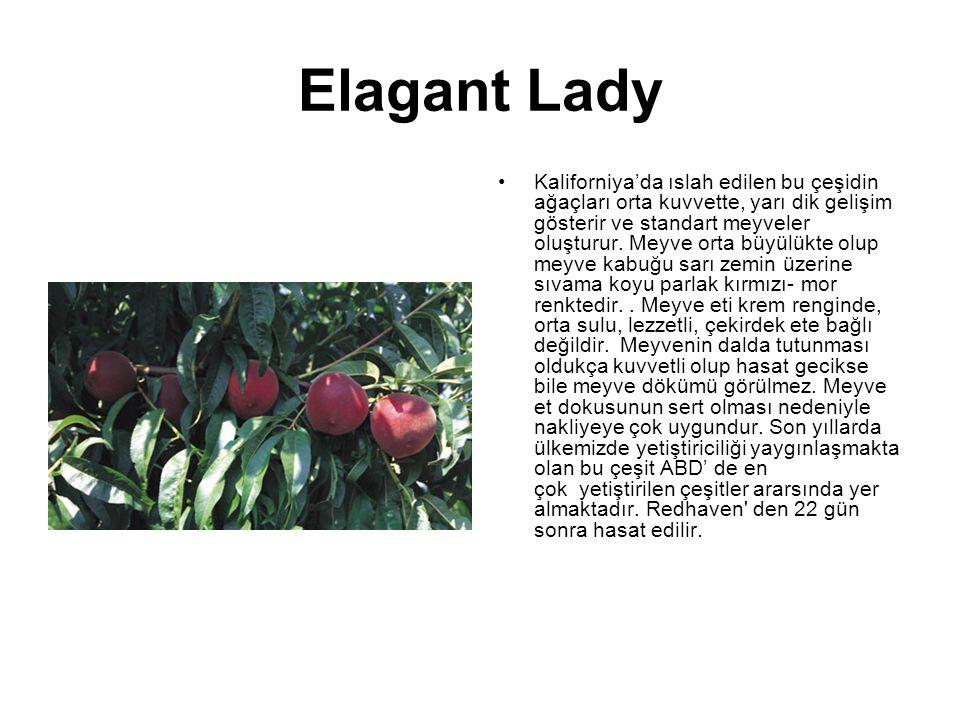 Elagant Lady