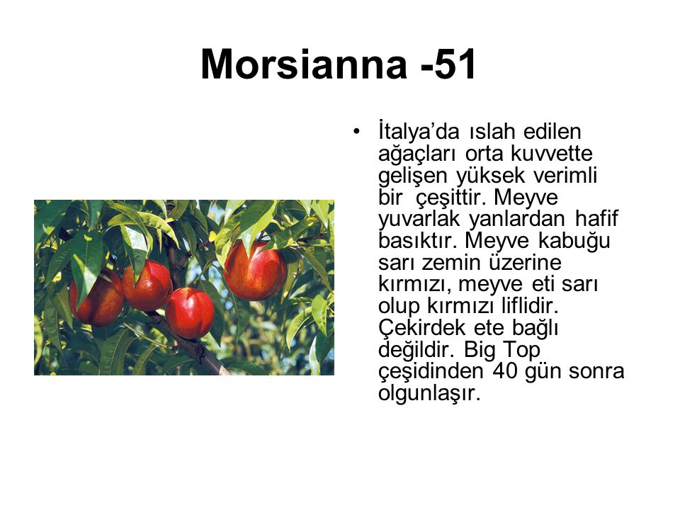 Morsianna -51
