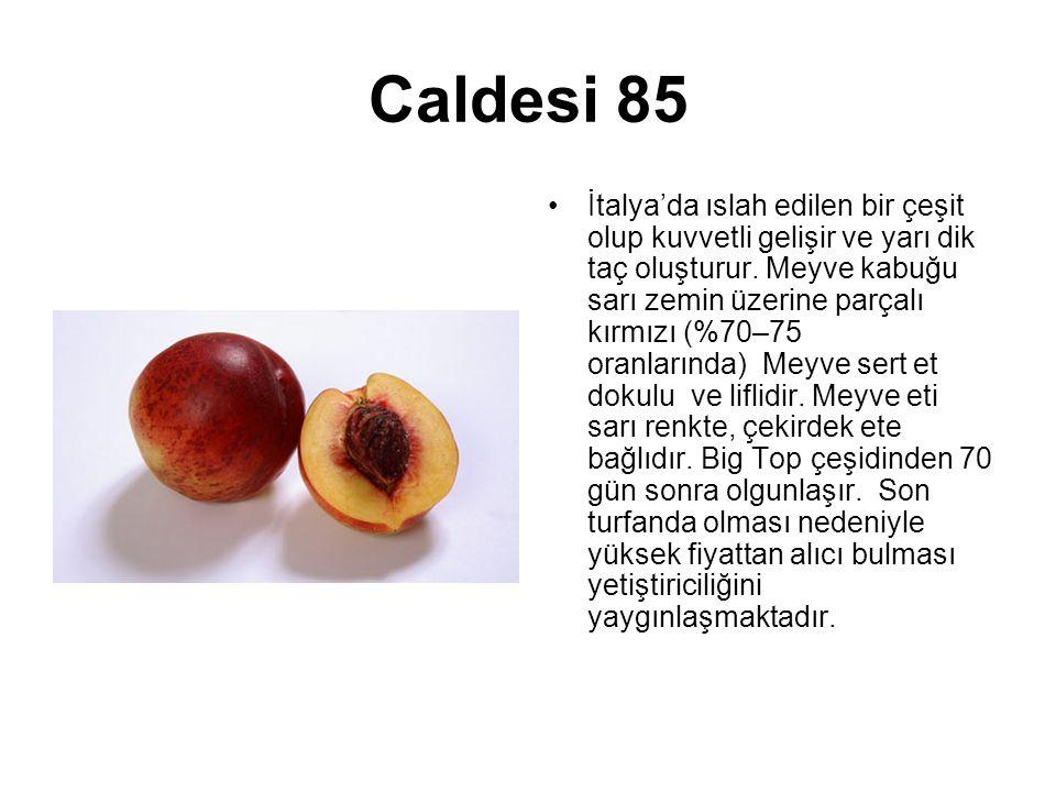 Caldesi 85