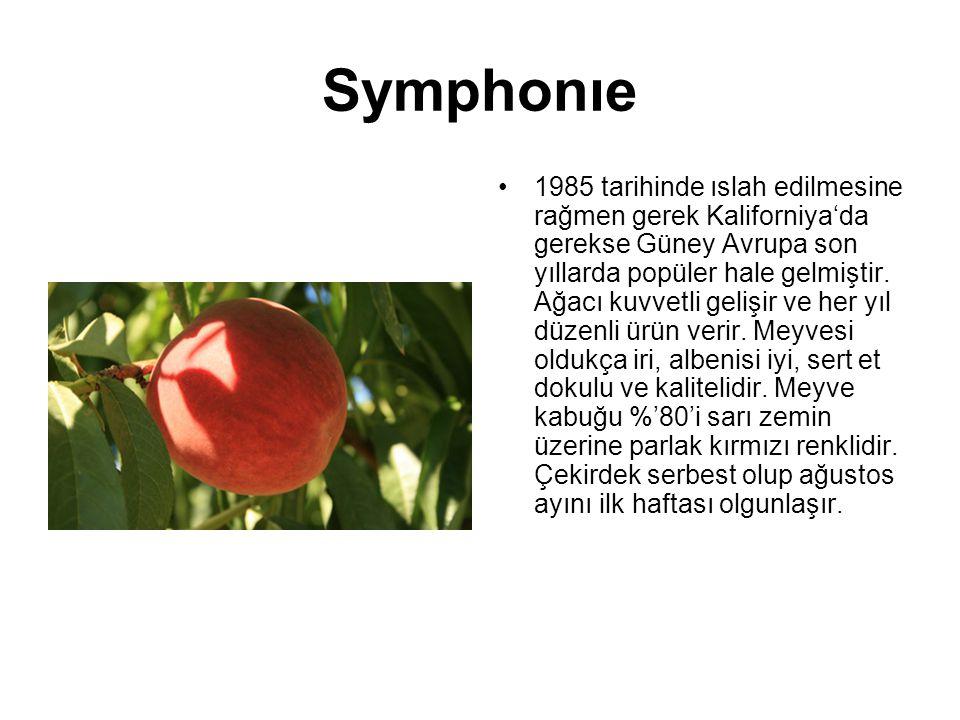 Symphonıe