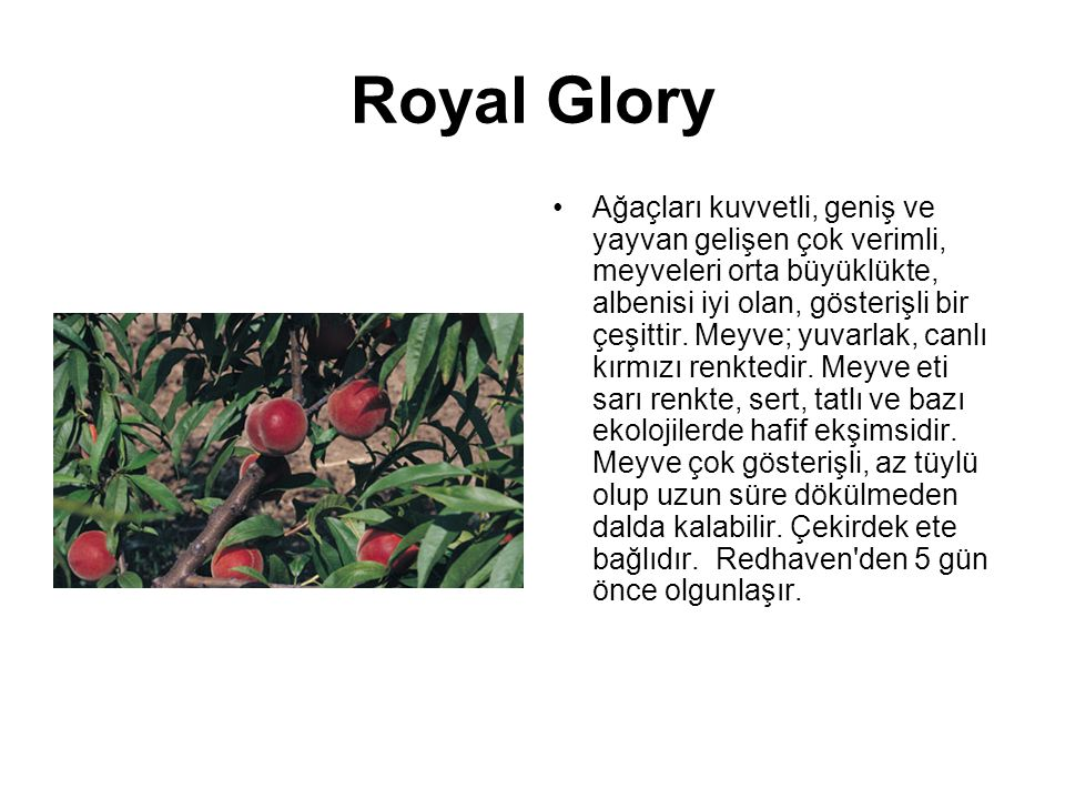 Royal Glory