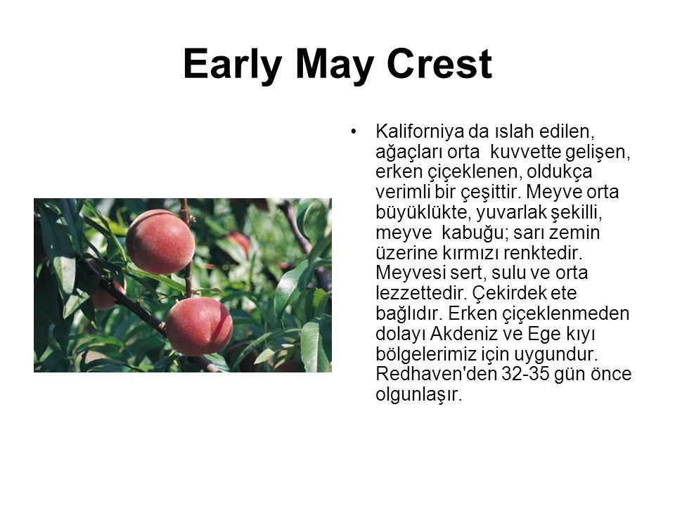 Early May Crest