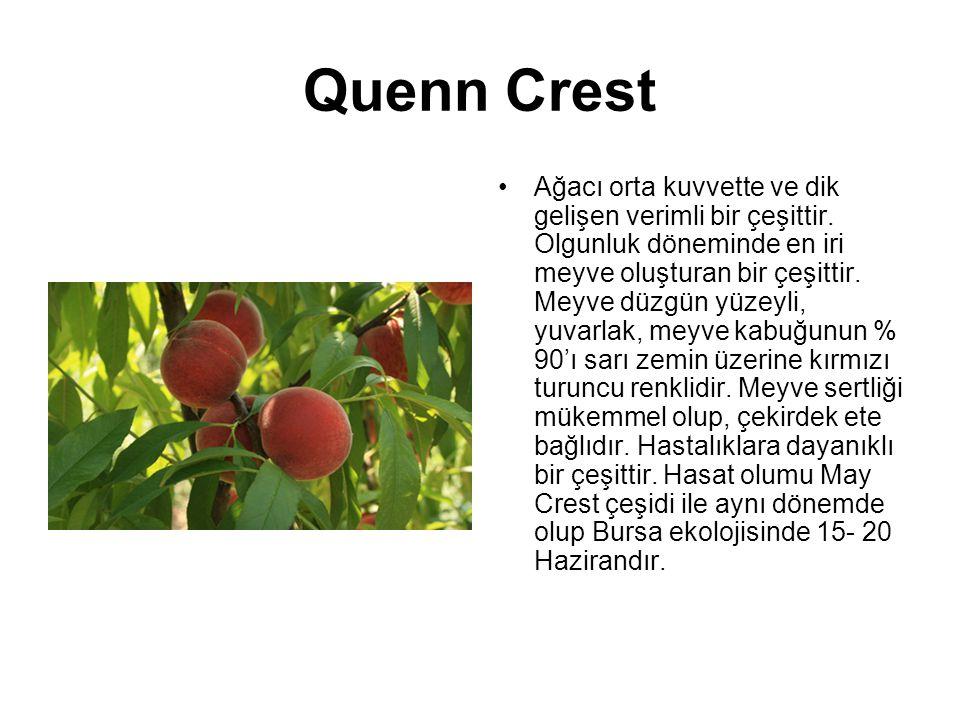 Quenn Crest