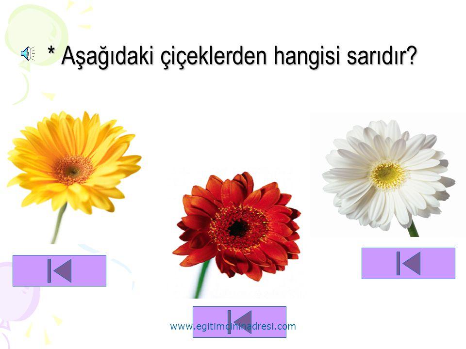 * Aşağıdaki çiçeklerden hangisi sarıdır