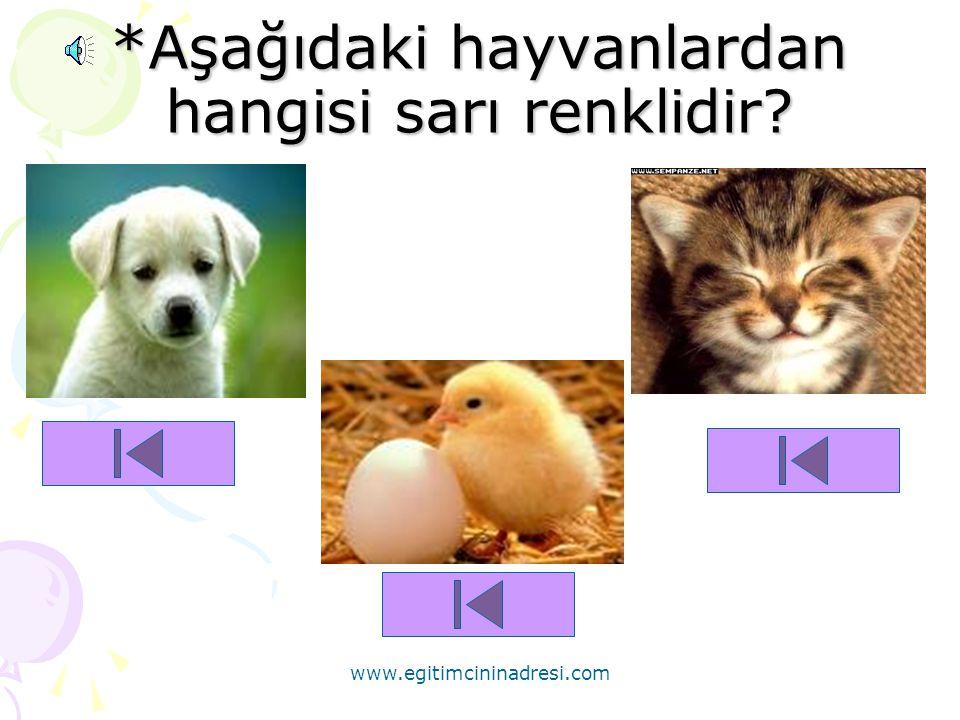 *Aşağıdaki hayvanlardan hangisi sarı renklidir
