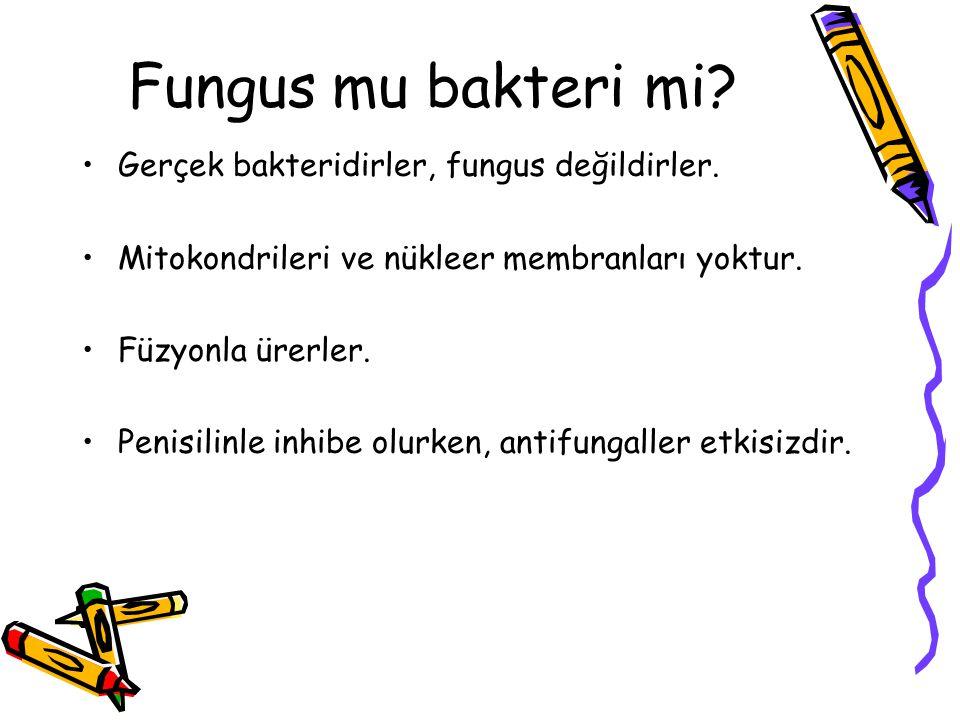 Fungus mu bakteri mi Gerçek bakteridirler, fungus değildirler.