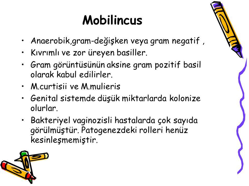 Mobilincus Anaerobik,gram-değişken veya gram negatif ,