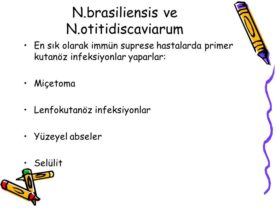 N.brasiliensis ve N.otitidiscaviarum