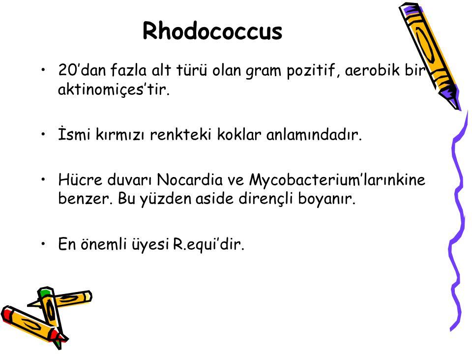 Rhodococcus 20'dan fazla alt türü olan gram pozitif, aerobik bir aktinomiçes'tir. İsmi kırmızı renkteki koklar anlamındadır.