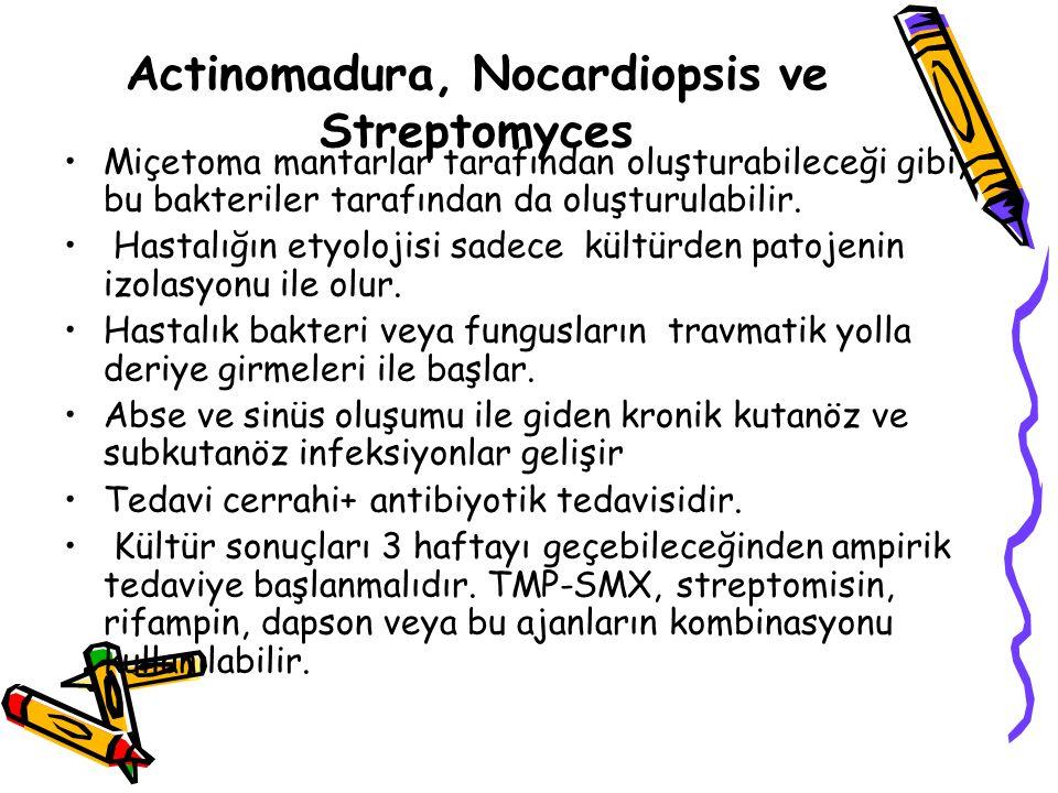 Actinomadura, Nocardiopsis ve Streptomyces
