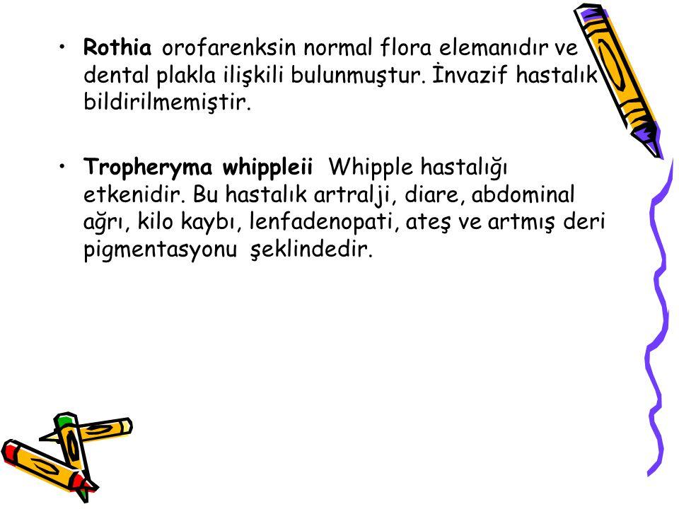 Rothia orofarenksin normal flora elemanıdır ve dental plakla ilişkili bulunmuştur. İnvazif hastalık bildirilmemiştir.