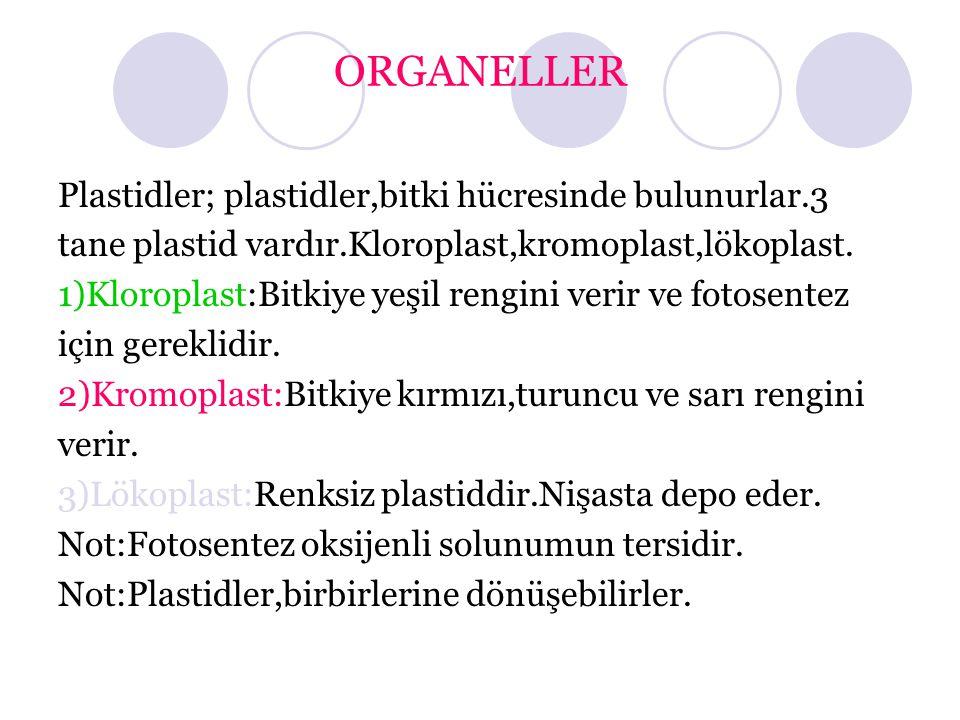 ORGANELLER Plastidler; plastidler,bitki hücresinde bulunurlar.3