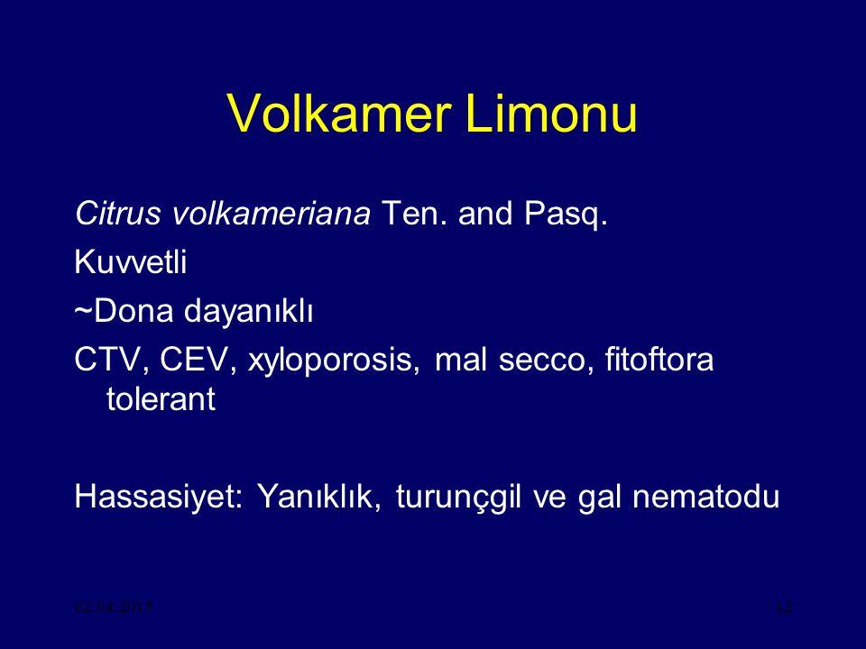 Volkamer Limonu Citrus volkameriana Ten. and Pasq. Kuvvetli