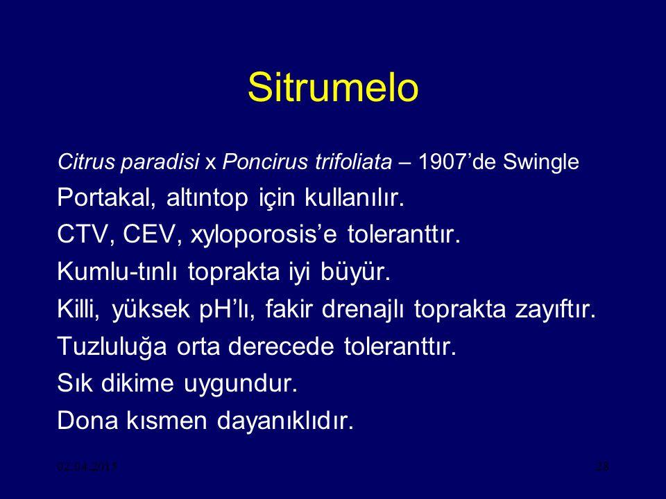 Sitrumelo Portakal, altıntop için kullanılır.