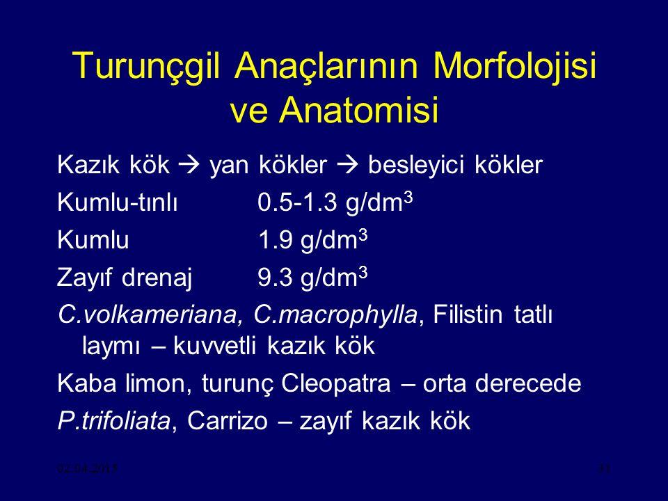 Turunçgil Anaçlarının Morfolojisi ve Anatomisi
