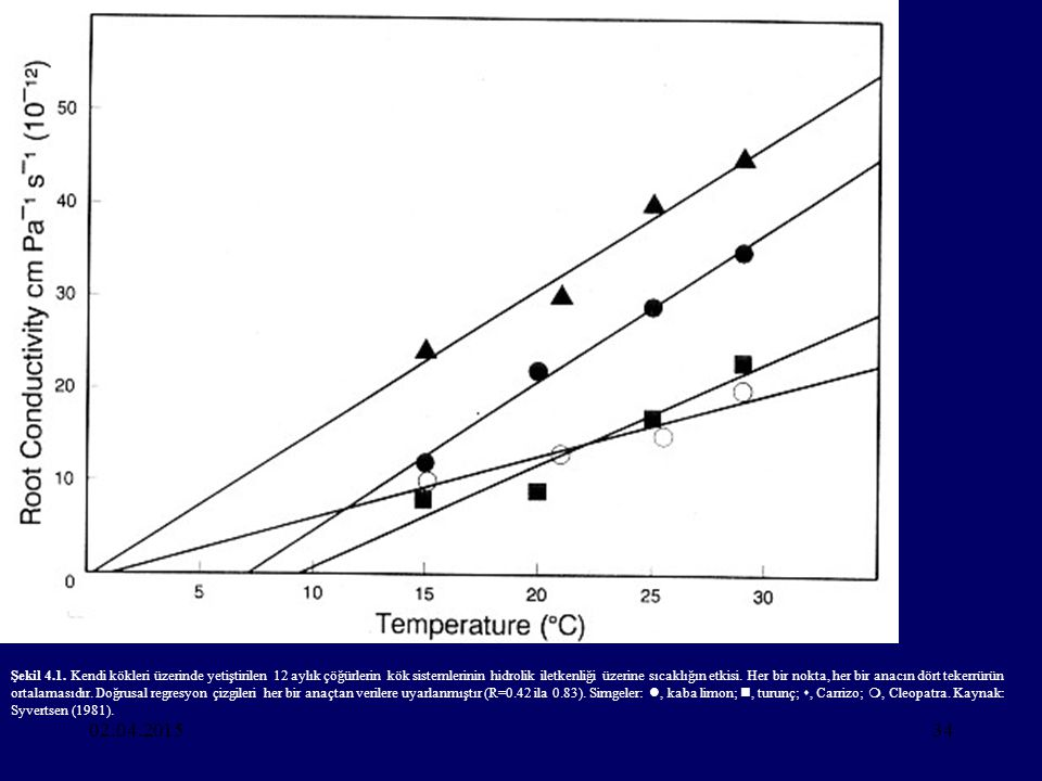 Şekil 4.1. Kendi kökleri üzerinde yetiştirilen 12 aylık çöğürlerin kök sistemlerinin hidrolik iletkenliği üzerine sıcaklığın etkisi. Her bir nokta, her bir anacın dört tekerrürün ortalamasıdır. Doğrusal regresyon çizgileri her bir anaçtan verilere uyarlanmıştır (R=0.42 ila 0.83). Simgeler: , kaba limon; , turunç; , Carrizo; , Cleopatra. Kaynak: Syvertsen (1981).