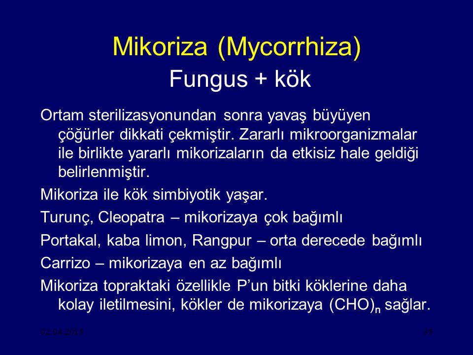 Mikoriza (Mycorrhiza) Fungus + kök