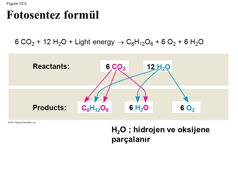 6 CO2 + 12 H2O + Light energy  C6H12O6 + 6 O2 + 6 H2O