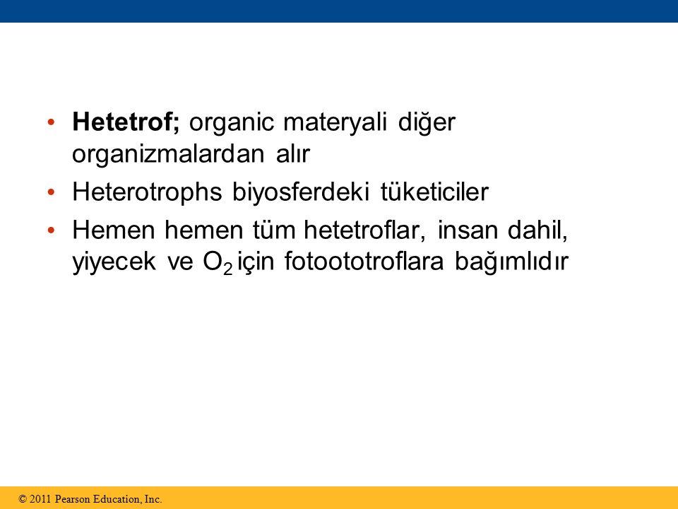 Hetetrof; organic materyali diğer organizmalardan alır