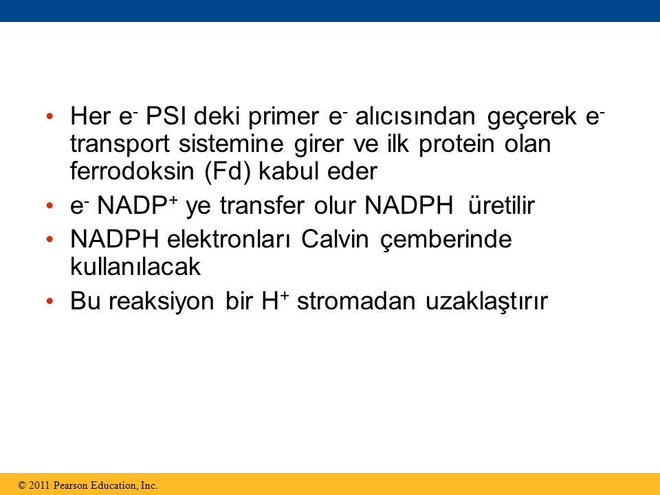 e- NADP+ ye transfer olur NADPH üretilir