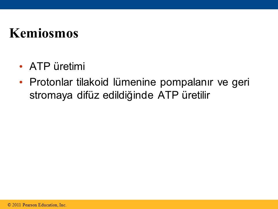 Kemiosmos ATP üretimi. Protonlar tilakoid lümenine pompalanır ve geri stromaya difüz edildiğinde ATP üretilir.