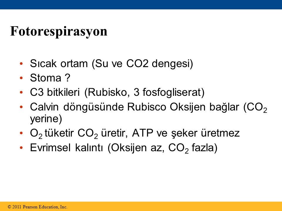 Fotorespirasyon Sıcak ortam (Su ve CO2 dengesi) Stoma