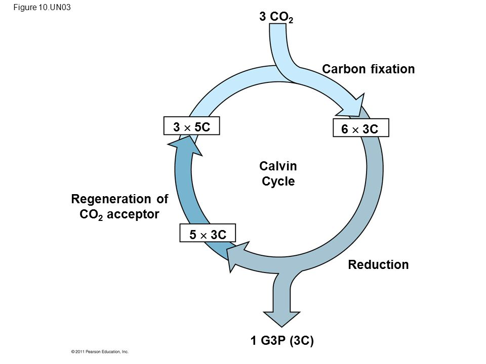 Regeneration of CO2 acceptor