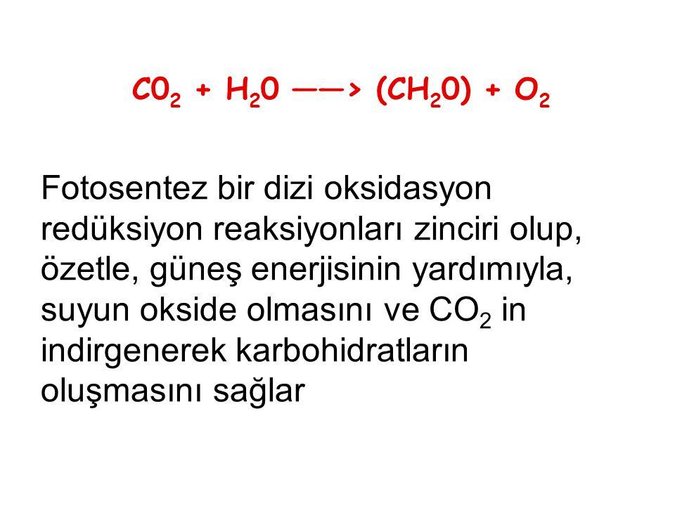 C02 + H20 ——> (CH20) + O2 Fotosentez bir dizi oksidasyon redüksiyon reaksiyonları zinciri olup, özetle, güneş enerjisinin yardımıyla, suyun okside olmasını ve CO2 in indirgenerek karbohidratların oluşmasını sağlar