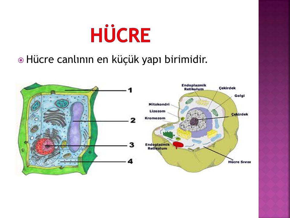 HÜCRE Hücre canlının en küçük yapı birimidir.