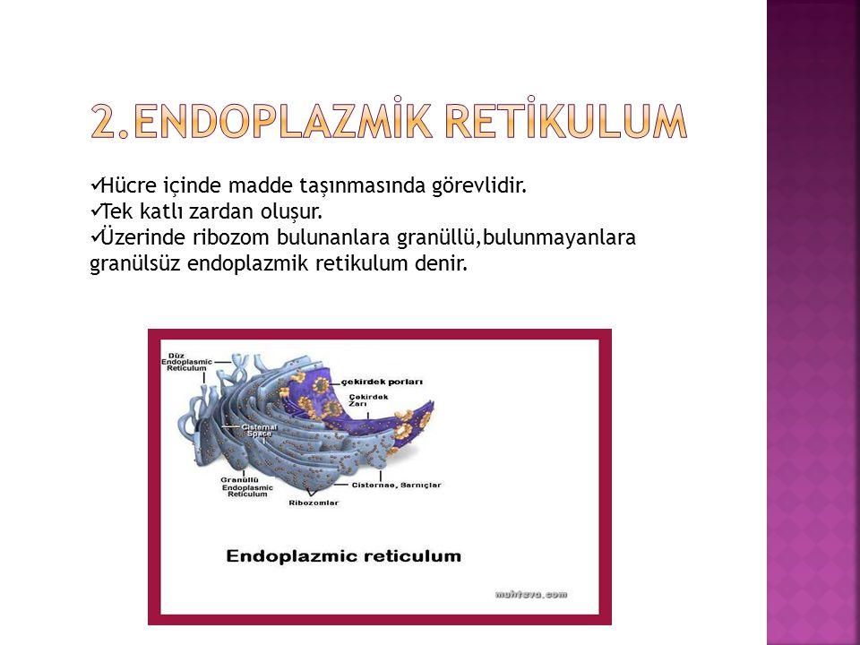 2.Endoplazmİk retİkulum