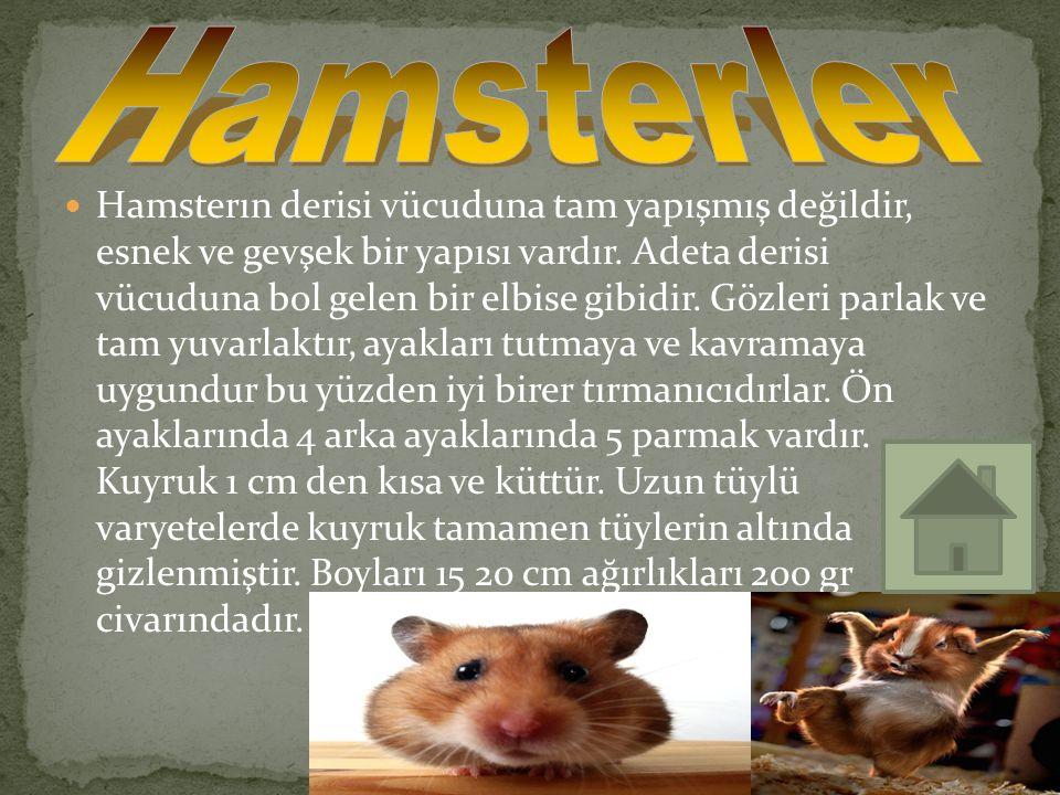 Hamsterler