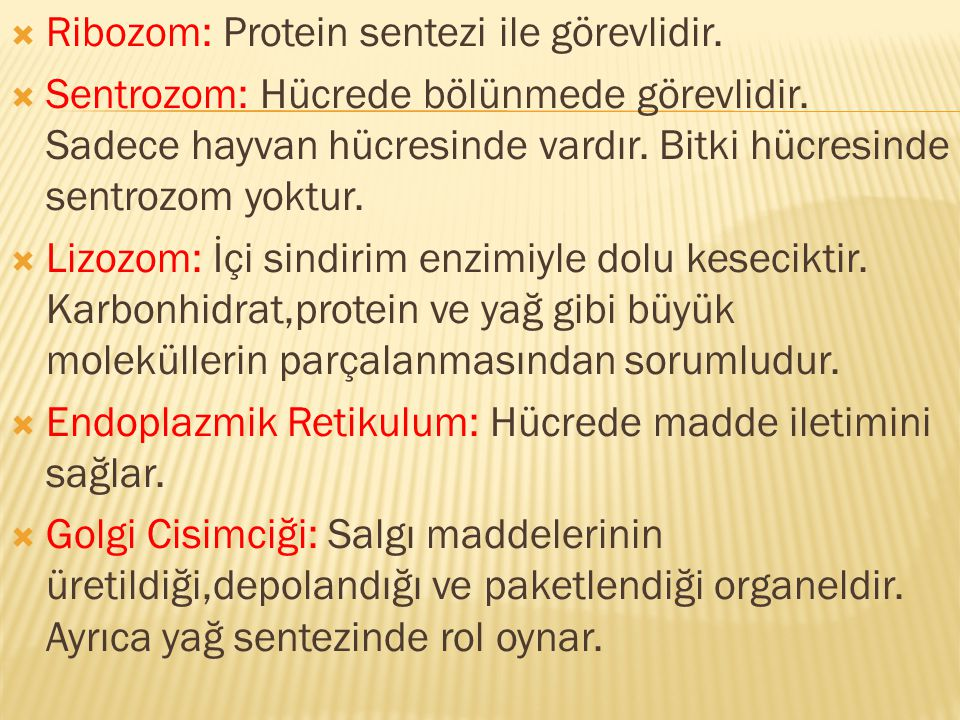 Ribozom: Protein sentezi ile görevlidir.