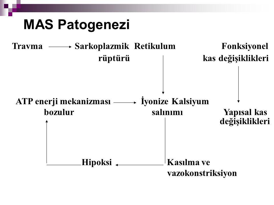 MAS Patogenezi Travma Sarkoplazmik Retikulum Fonksiyonel