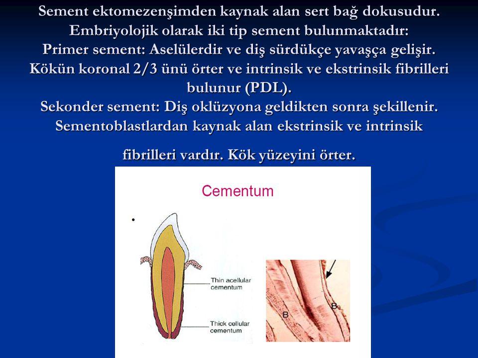 Sement ektomezenşimden kaynak alan sert bağ dokusudur