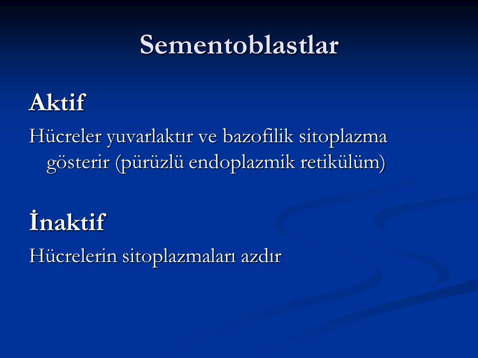 Sementoblastlar Aktif İnaktif