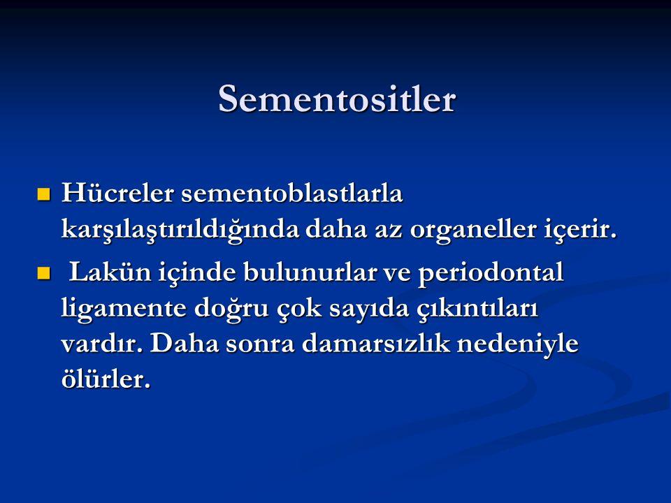 Sementositler Hücreler sementoblastlarla karşılaştırıldığında daha az organeller içerir.
