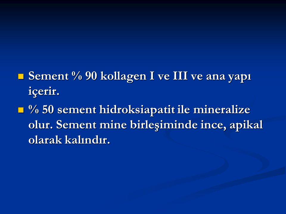 Sement % 90 kollagen I ve III ve ana yapı içerir.