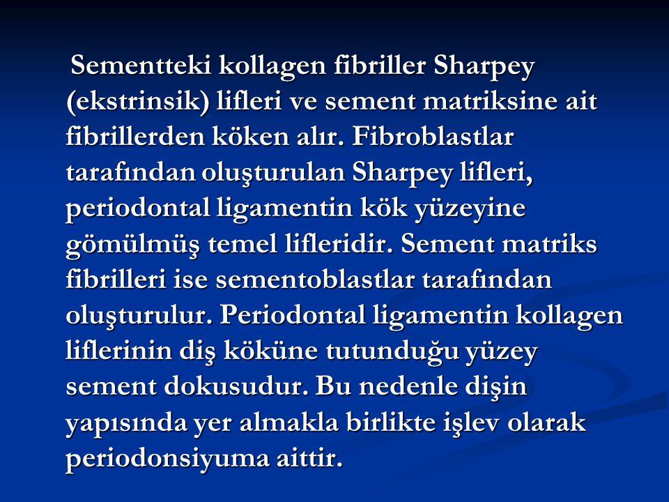 Sementteki kollagen fibriller Sharpey (ekstrinsik) lifleri ve sement matriksine ait fibrillerden köken alır.